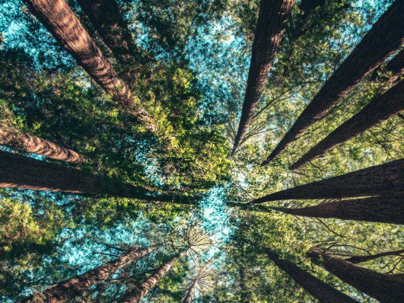 Wir pflanzen 69 Bäume in Sachsen