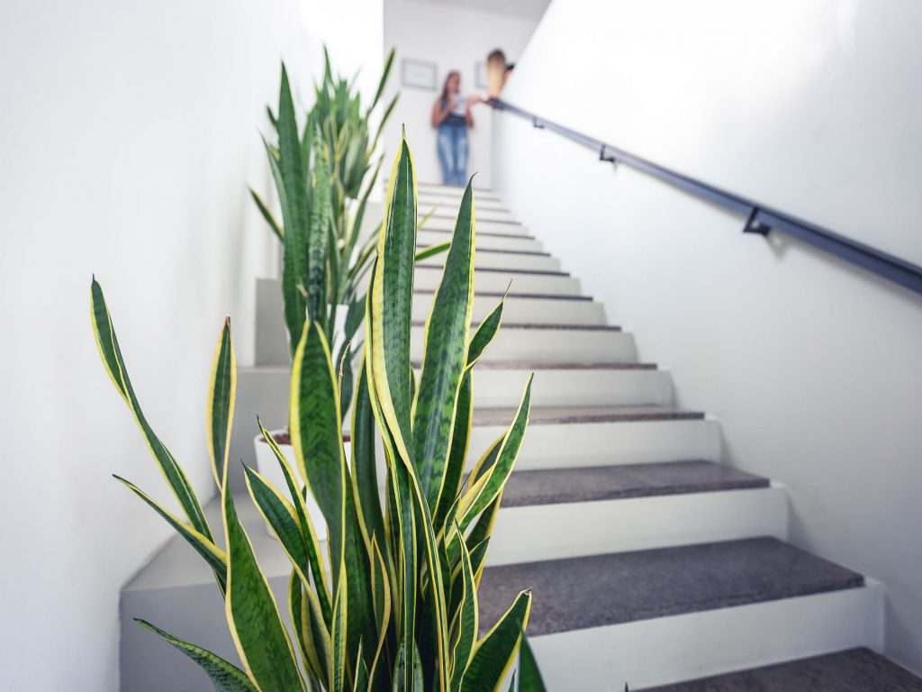 Treppenaufgang mit Bogenhanf-Pflanze